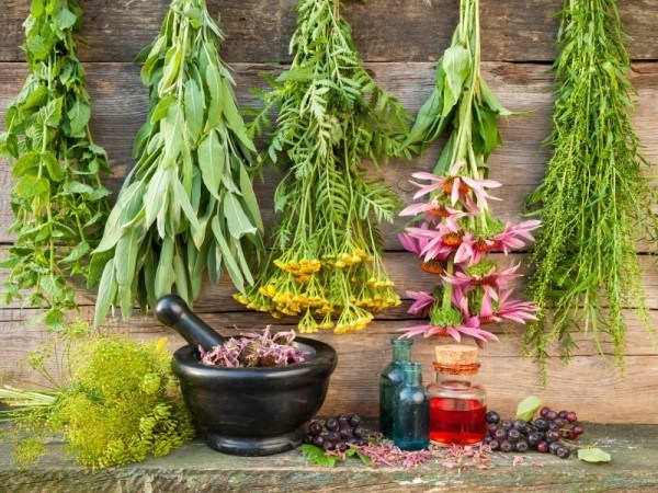 Herbs have been used for healing since time immomorial.